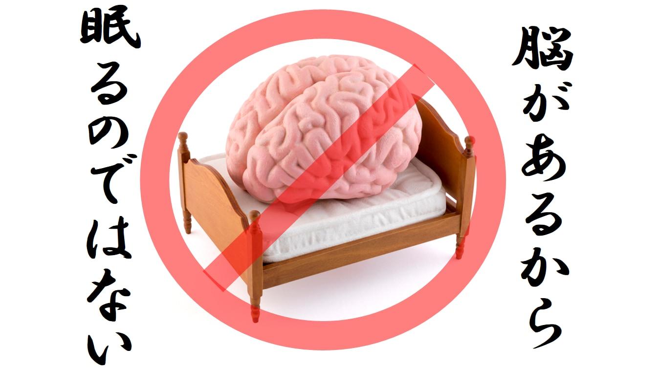 脳が無くても動物は何億年も前から眠ってきた
