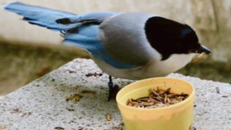 """鳥類も人と同じ""""思いやりの同情能力""""を持って、エサを貧しい仲間に施すという研究結果"""