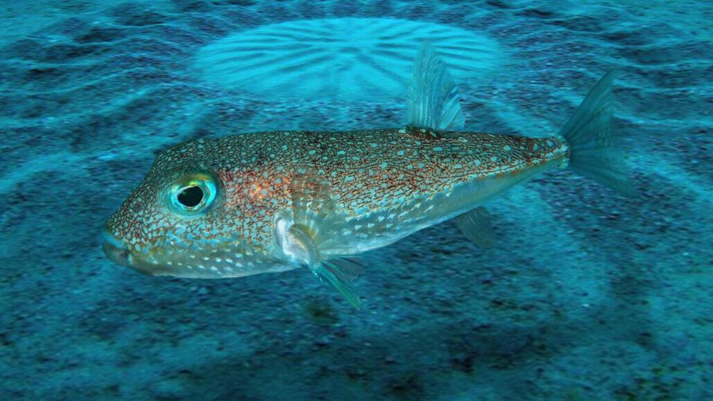 オーストラリア近海で海底サークルを発見