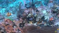 見つかった巨大サンゴ礁の一部、水深49mあたり