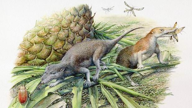 """人類最初の先祖は""""長寿命の変温動物""""だったと判明! 新たな化石調査から紐解かれる歴史"""