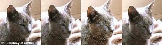 猫は半目状態から目を閉じ、次に目を細める