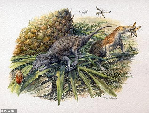 最古の哺乳類は長寿命の変温動物だった⁈