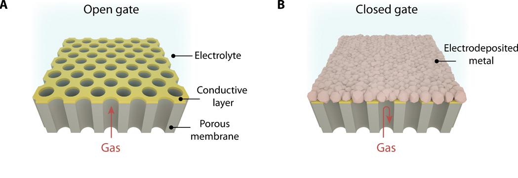(左)膜の構造(右)表面を金属膜が覆った状態