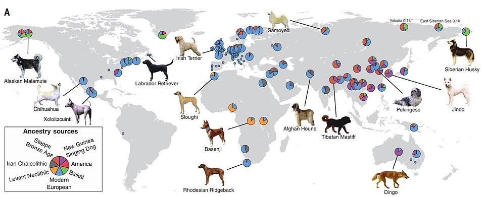 現代の犬種の遺伝的な起源