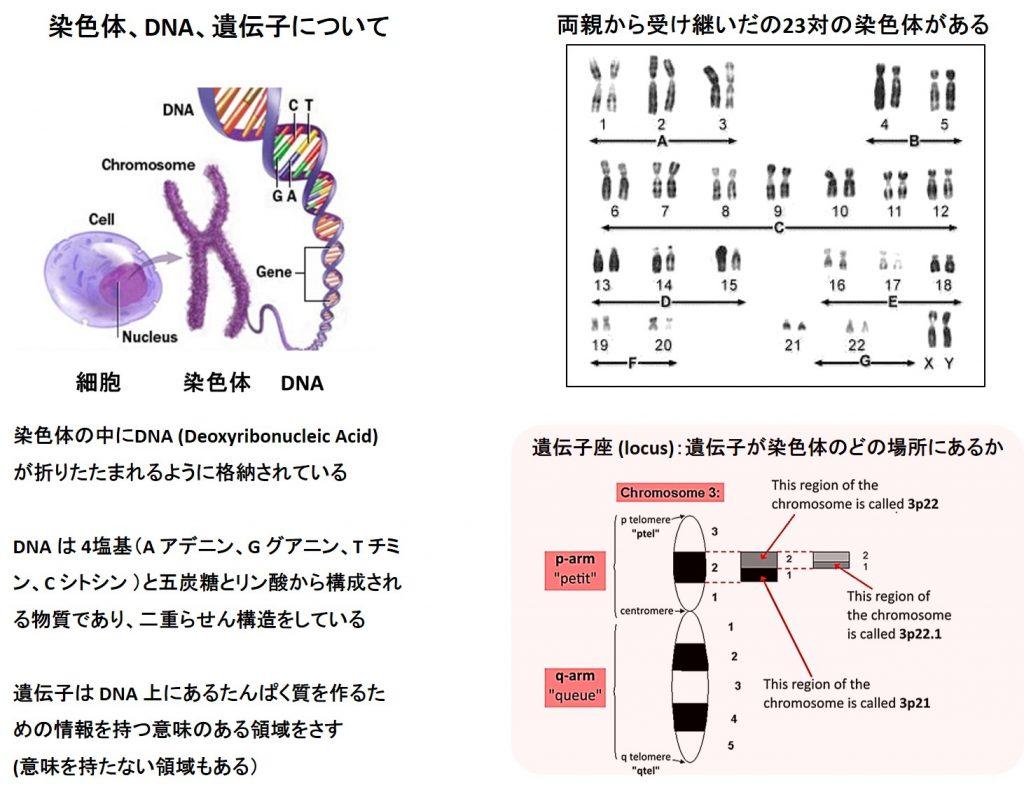 第三染色体にある遺伝子座3p21.31