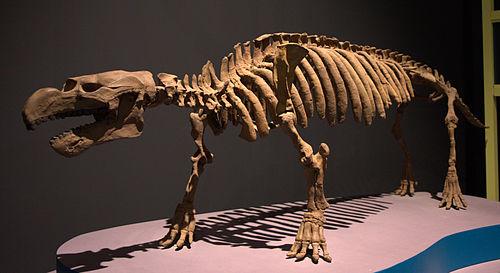 最古のジュゴン目「ペゾシーレン」の骨格