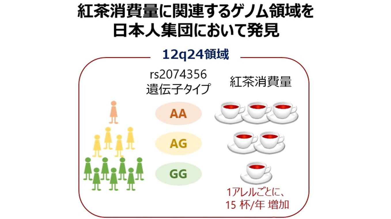 12q24には紅茶の好み以外にもお酒の強さやコーヒーの好みにかかわる部分がある