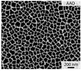 走査電子顕微鏡による膜画像