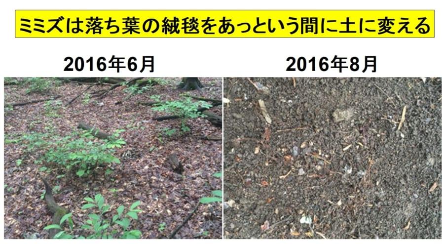 黒い落ち葉の層が分解され、2カ月後には全て茶色い土になってしまった