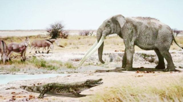 """スペインで""""アフリカのワニ""""の化石を発見!600万年前に「海を泳いで移動していた」"""