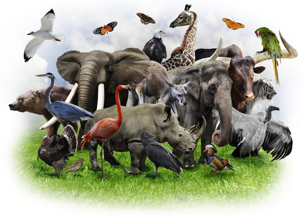 面白い習性を持つ動物たち