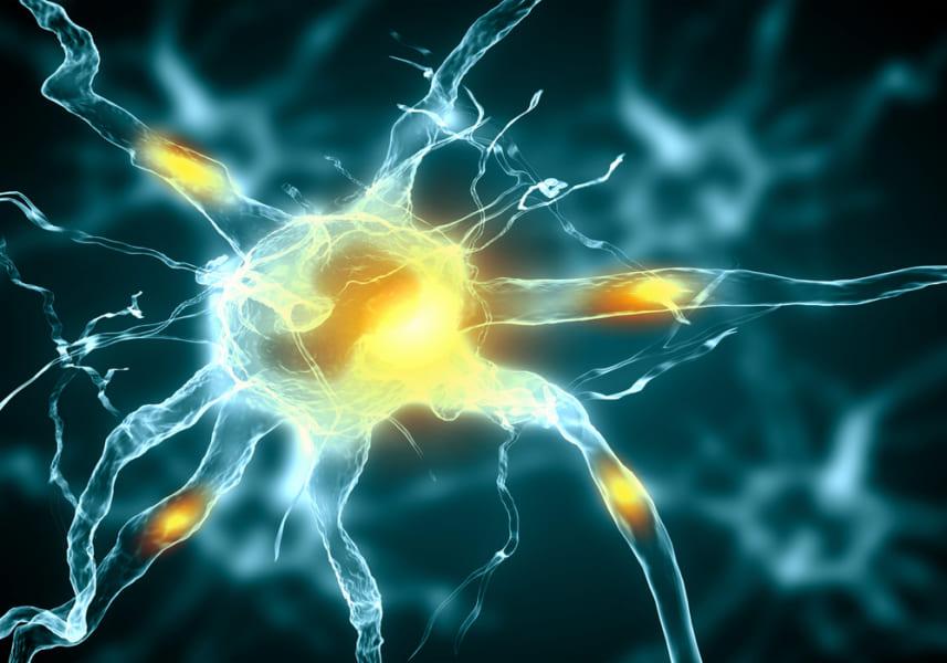 神経細胞のイラスト。