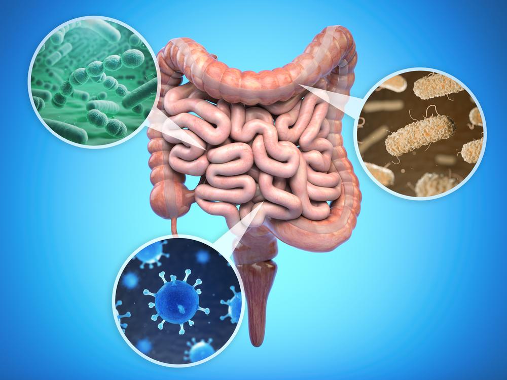 ヒトの腸内の細菌。