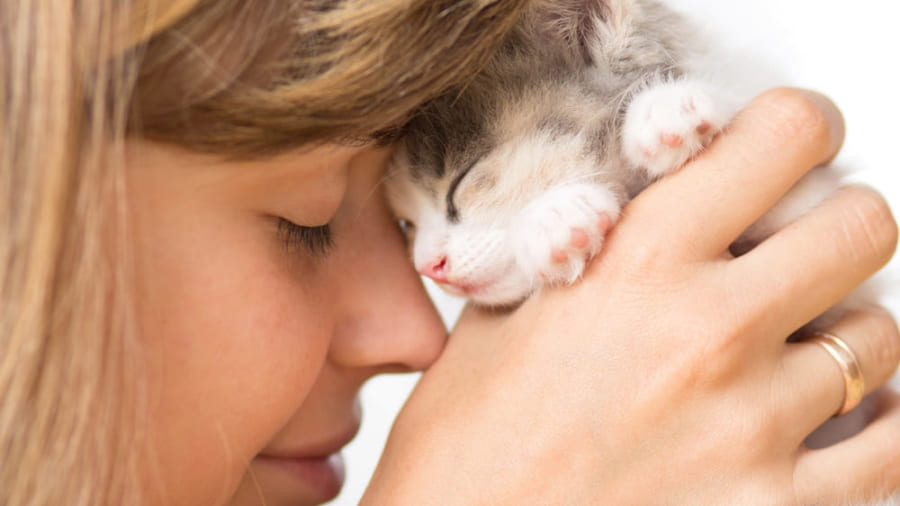 ネコに好かれるためには「ゆっくりまばたきをする」ことが重要という研究結果