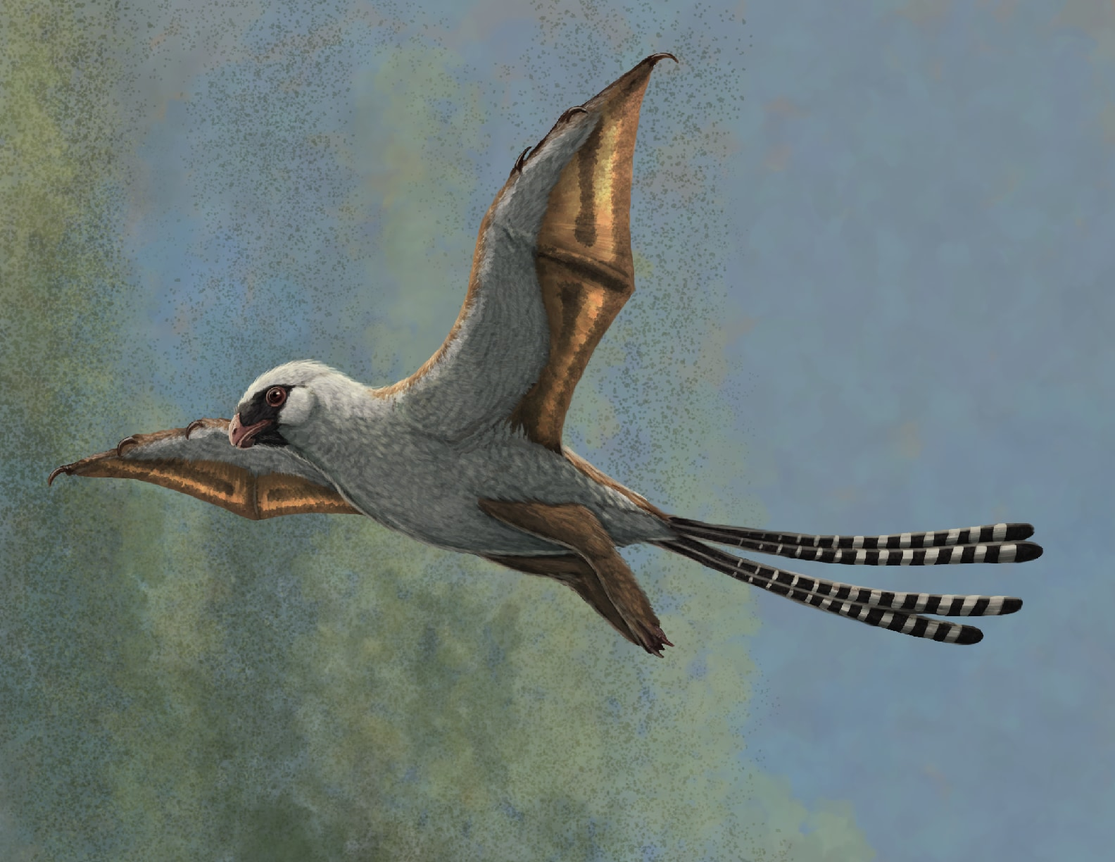 翼を持った小型の恐竜「アンボプリテクス」の想像図。