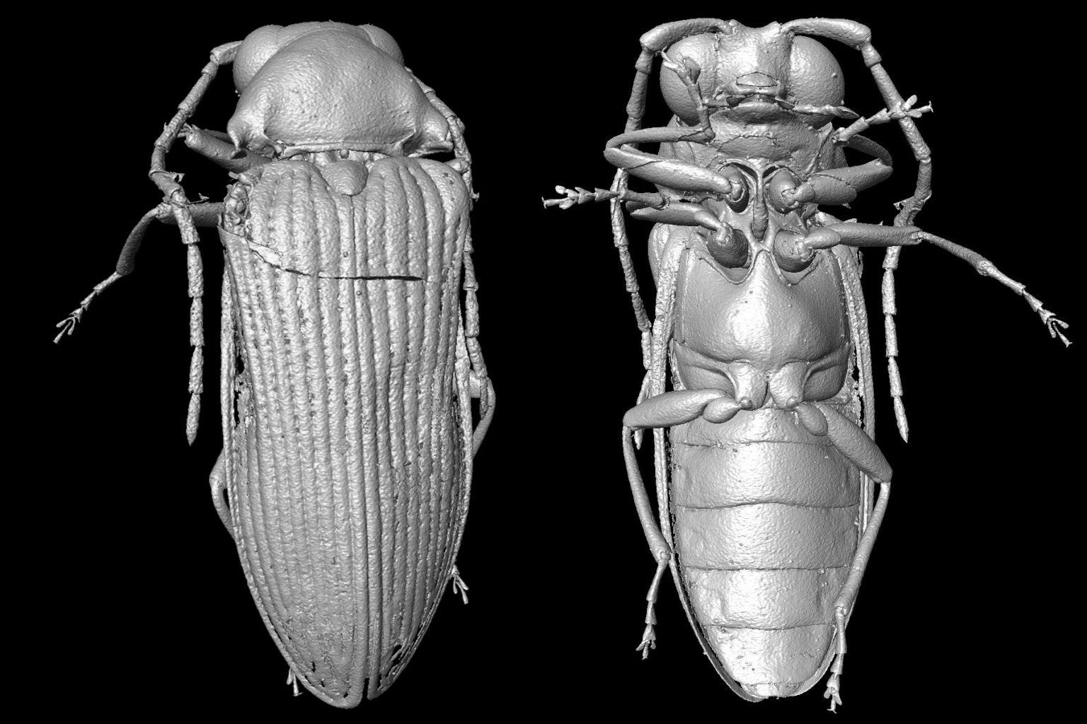 琥珀に保存された9900万年前の昆虫をデジタル状で再構築