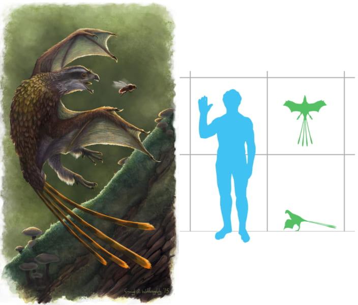「イー」の想像図(左)。人間とのサイズ比較(右)。