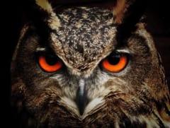 フクロウの「夜目」はどのように進化した?