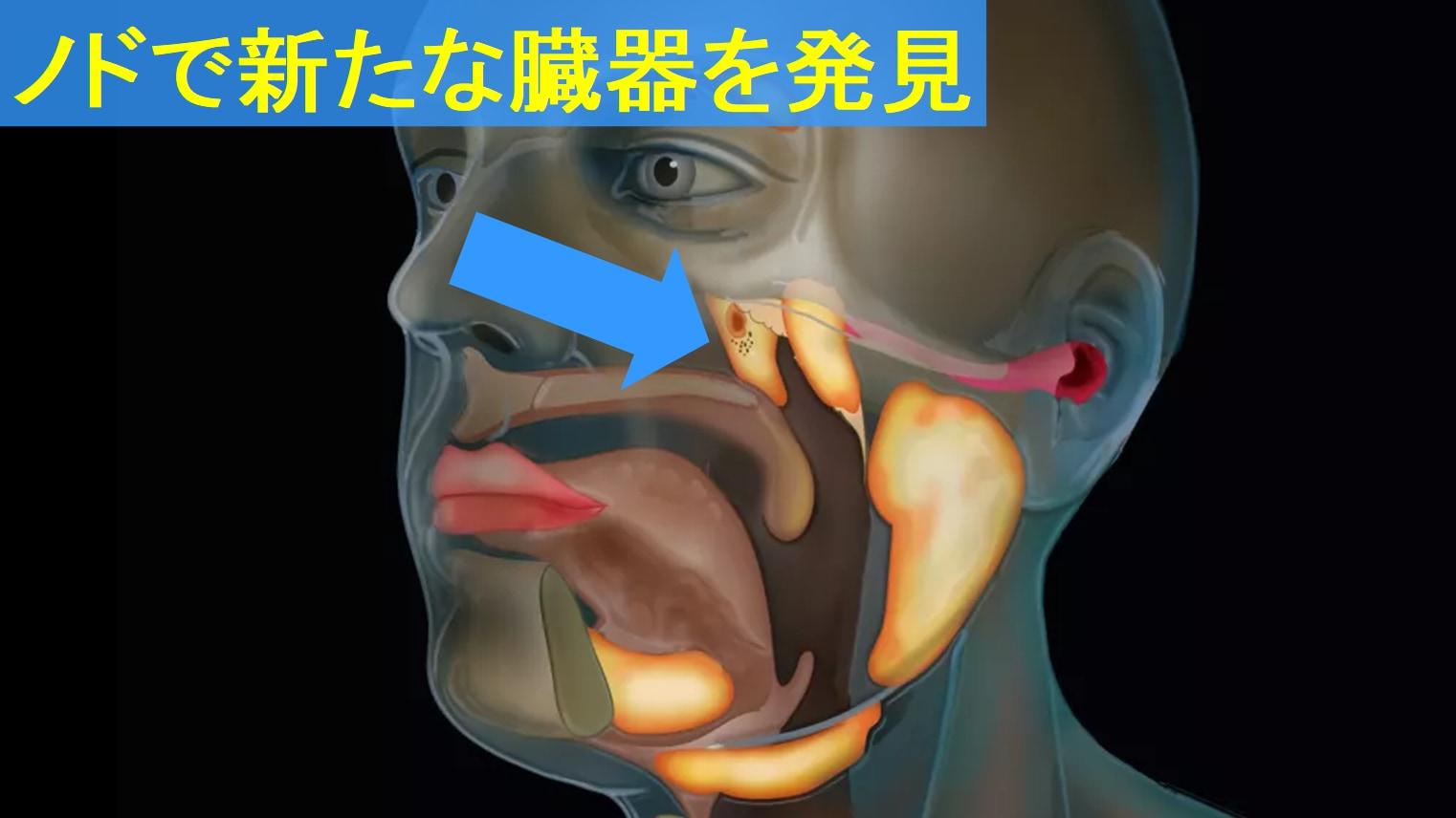 最新のCTスキャンによって喉に新しい臓器が発見された