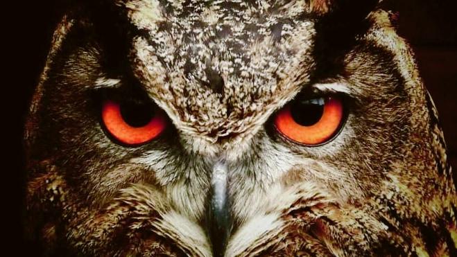 """フクロウの目は「暗視」を高める特殊なDNA配置を持っていた! """"夜行性の霊長類に近い進化"""""""