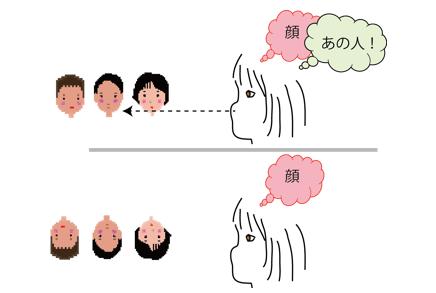 正立の顔と倒立の顔に対して脳が処理する情報。