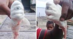 インドネシアで発見された「一ツ目のアルビノザメ」