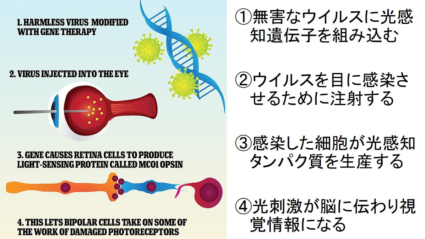"""""""目の遺伝子を書き換える""""ことで盲目マウスの視力回復に成功! 「年内に人間でもテスト開始」の画像 4/5"""