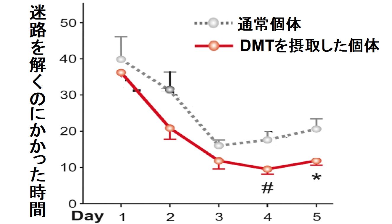 DMTを摂取した個体のほうが迷路を早く攻略する