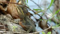 """寒すぎて""""樹上から落下するトカゲ""""が続出! 「1〜4℃の低温」に耐えられるよう順応していた可能性(アメリカ)の画像 3/4"""