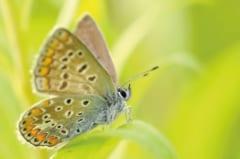 チョウは翅を立てる