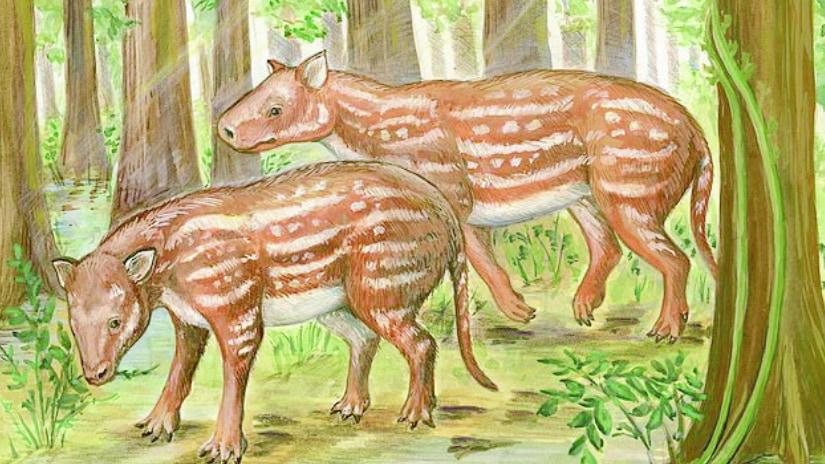 """「ウマとサイは仲間」インドにあった化石から""""共通の祖先""""を復元、ウマのルーツが明らかに"""