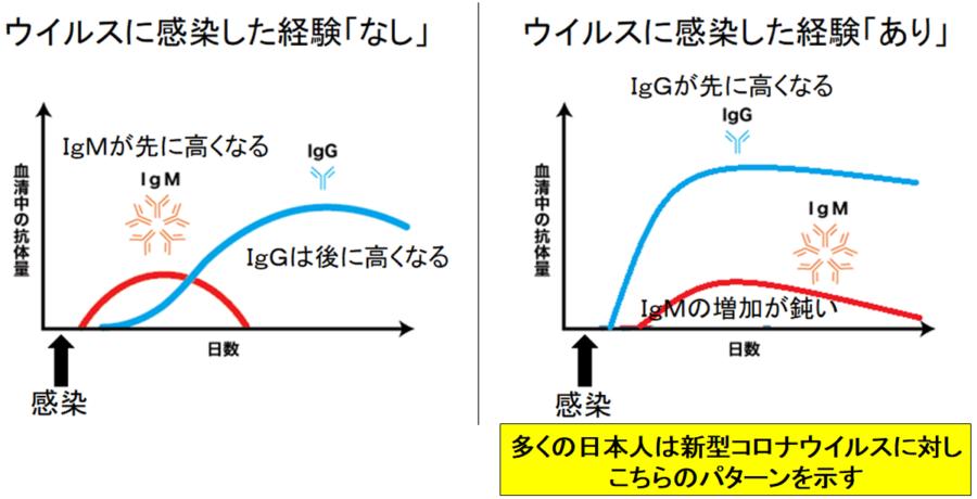 多くの日本人の免疫反応は新型コロナウイルスを2回目の感染だと判断する