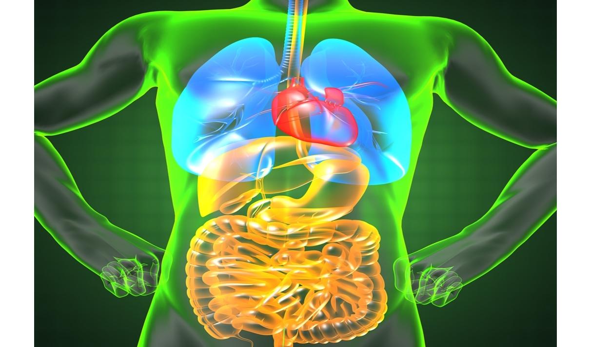 腸内細菌は精神や身体の健康などあらゆる部分に影響する