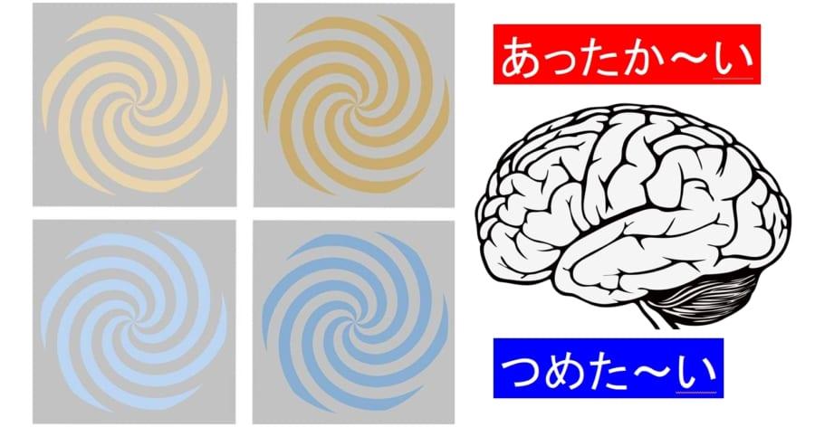 脳は色ごとに異なる磁気反応をしめした