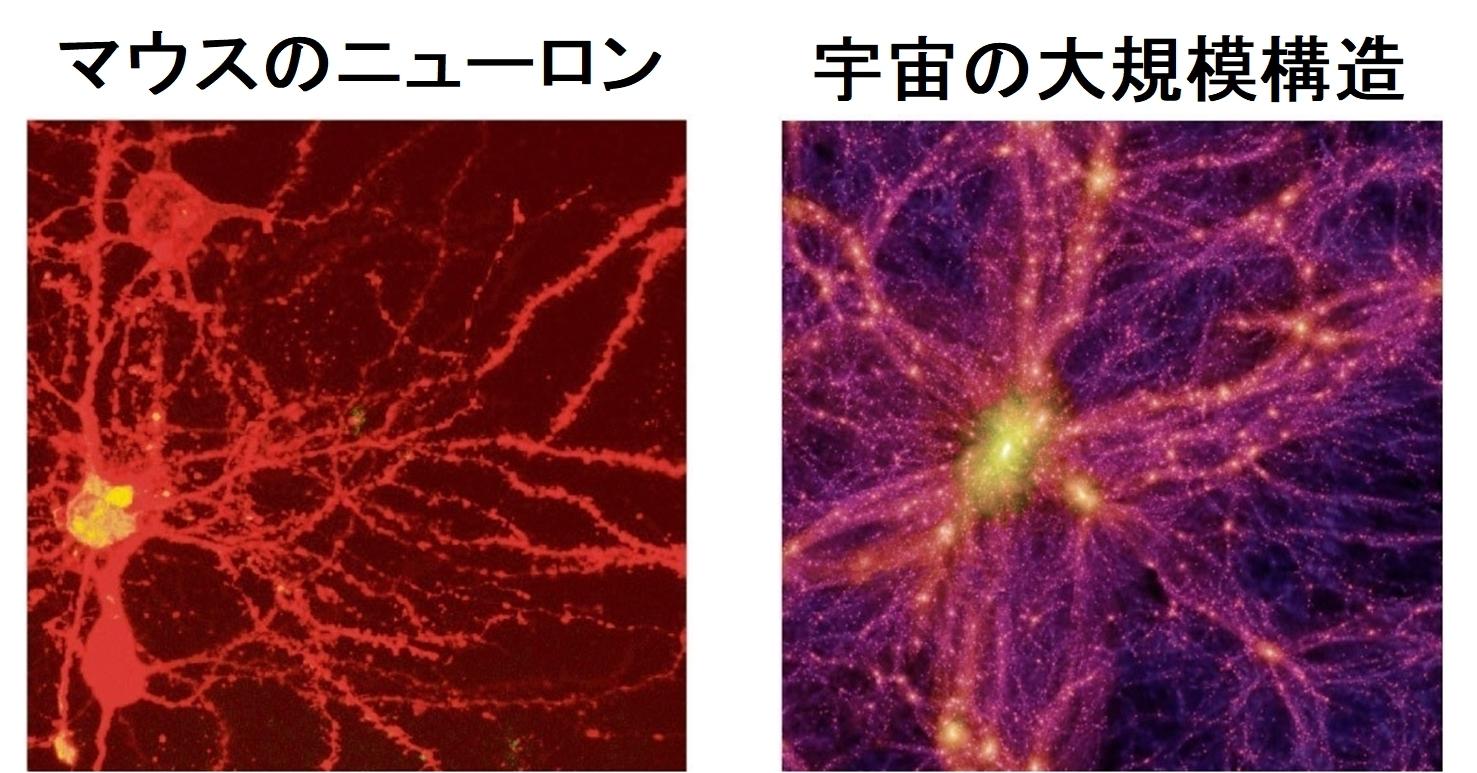「宇宙と脳は構造が似ている」と数学的に証明される! 宇宙は脳で脳は宇宙だった?の画像 2/4