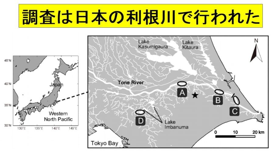 調査は日本の利根川で行われた