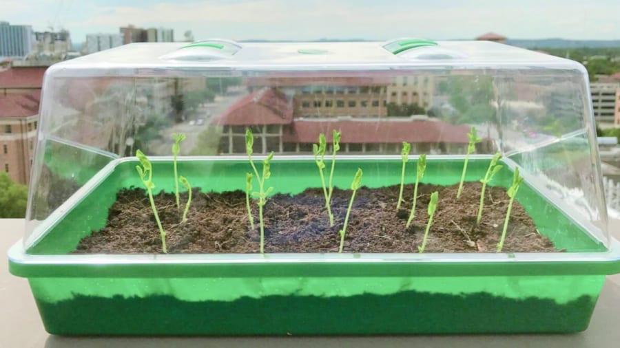 空気中から水を吸収できる「超スポンジ土壌」、昼夜の気温差を利用して水やりも全自動