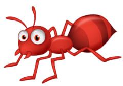 アリがアブラムシに集まるのはなぜ?
