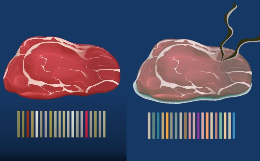肉の腐敗ガスに応じてバーコードが変化する