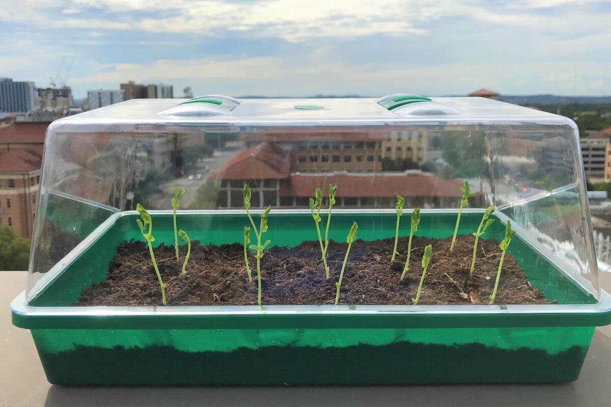 ゲル土壌は水分を長期間保持し、植物の成長を助ける