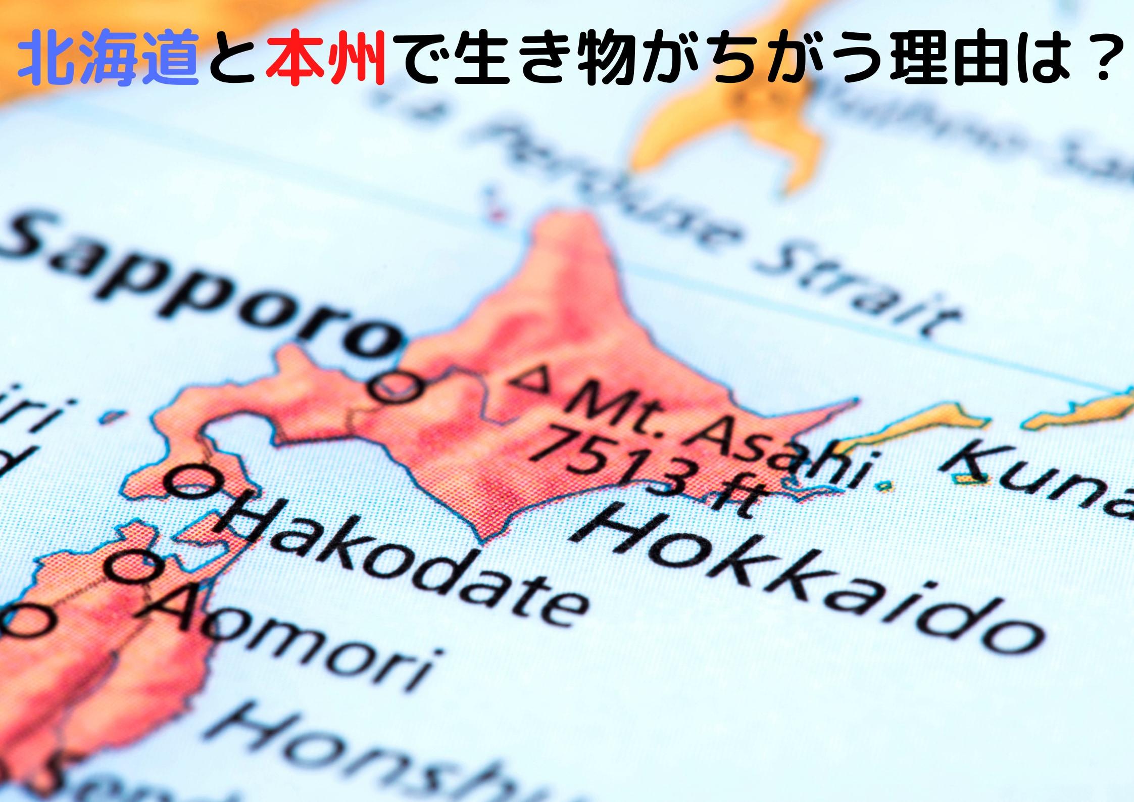 北海道と本州を二分する「ブラキストン線」とは