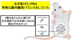 放射線から生き延びた1割は特殊な腸内細菌バランスを持っていた