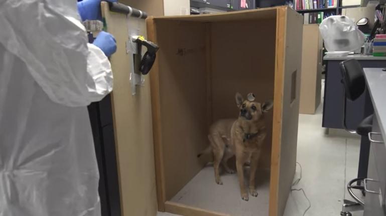 犬のマダニは、気温が上がるとターゲットを人に変える