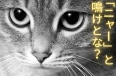 野良猫は「ニャー」と鳴かない