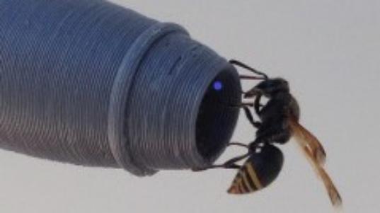 オーストラリアの空港で「ハチの巣」が飛行機を妨害している!?