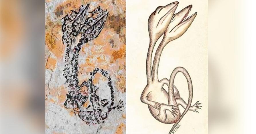 出産中の母親?頭が2つのトカゲ? 「トンデモ化石5選」