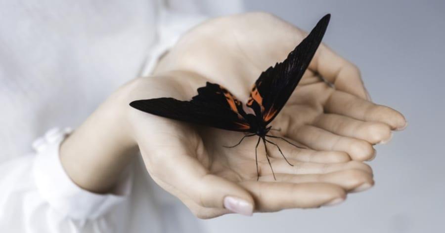 チョウとガはどこが違う? 見分けるポイントとは