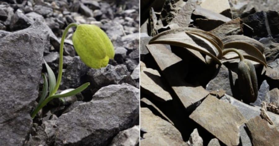 中国の植物が人間に対抗して「カモフラージュ」を習得! 2000年以上の収穫が変化を起こした