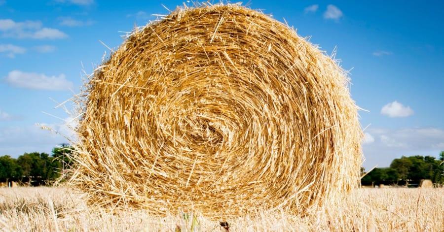 干し草にはほとんどタンパク質が含まれていないのに、どうして草食動物に肉があるのだろうか?